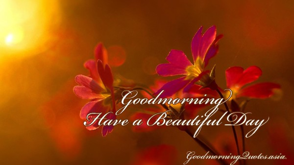 Have A Beautiful Day - Good Morning-wg16338
