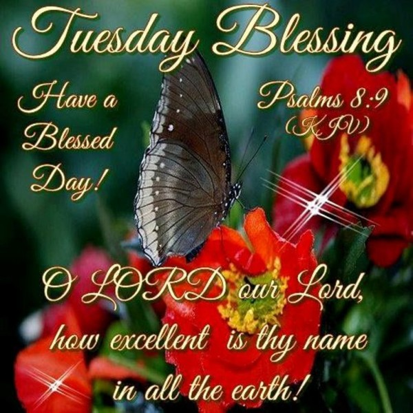Have A Blessed Day-wg034298