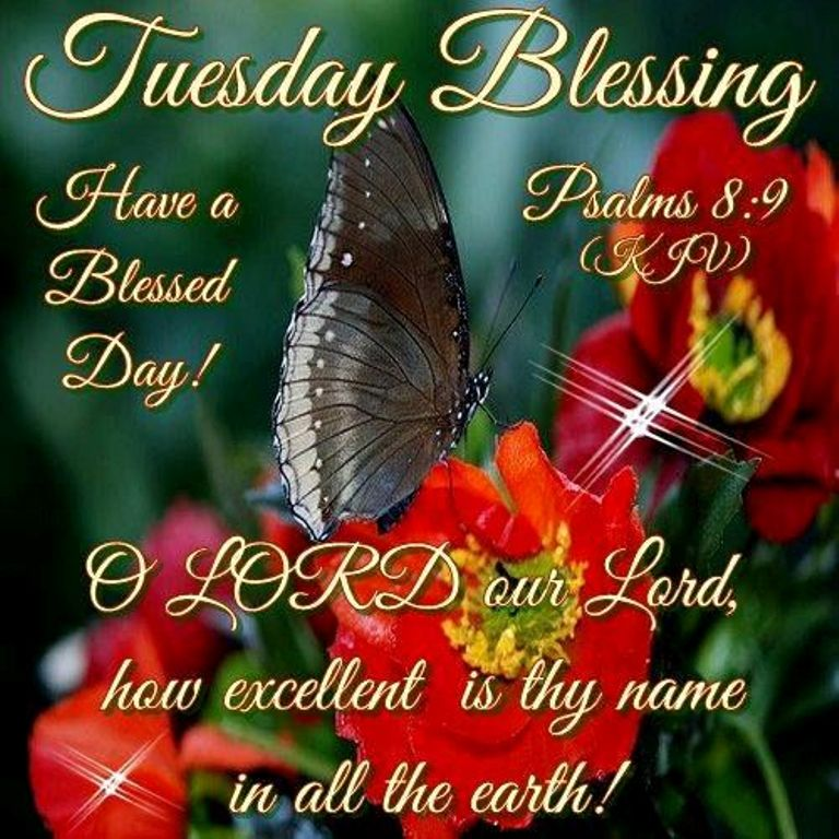 Good Morning Everyone Happy Tuesday : Good morning wishes on tuesday pictures images page