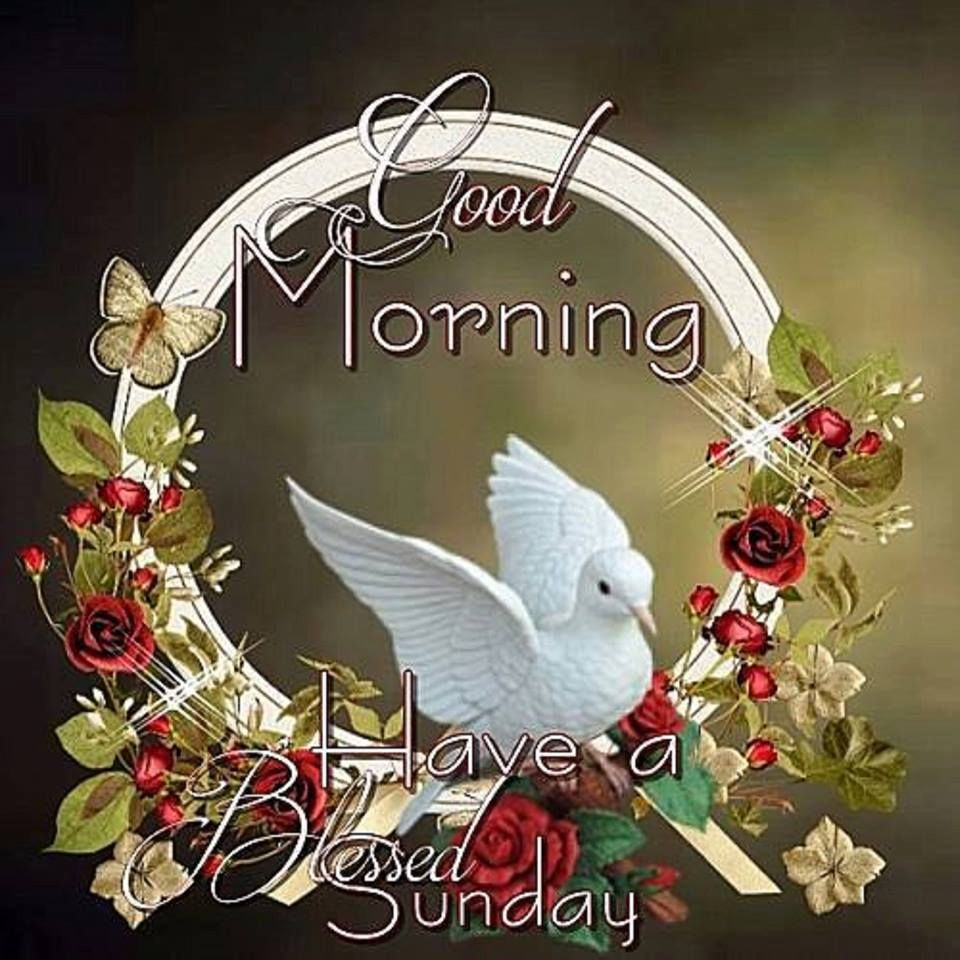 Good Morning Wishes On Sunday Pictures Images Page 5