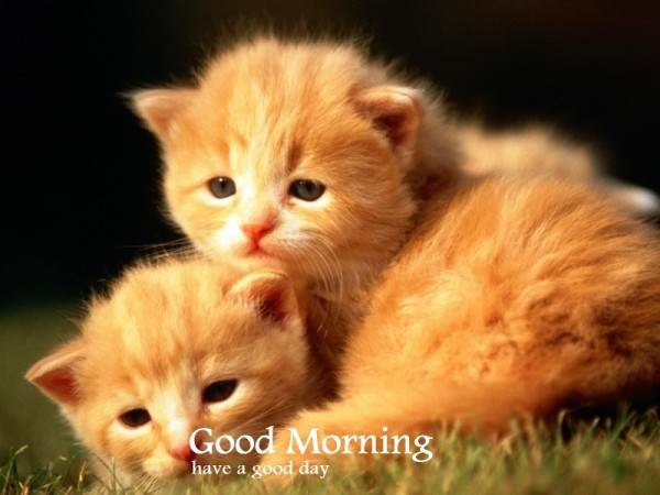 Have  A Good Day With Cats-wg16331