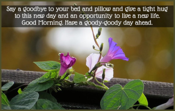 Have A Goody Goody Day Ahead-wg16352
