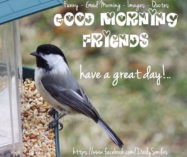 Have A Great Day Friends-wg16361