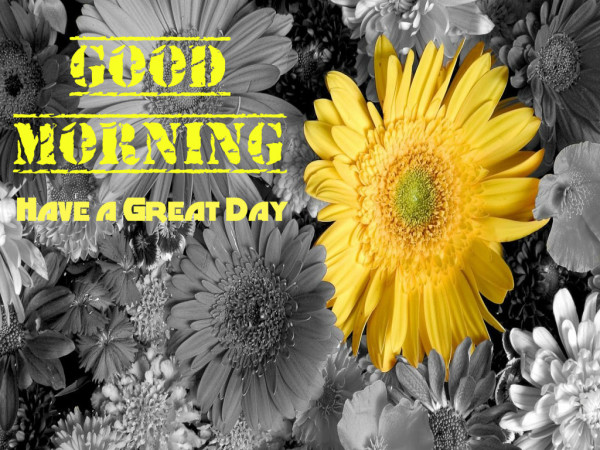Have A Great Day - Good Morning !-wg16354