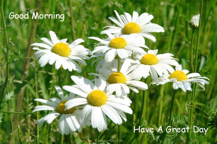 Have a great day white flowers mightylinksfo