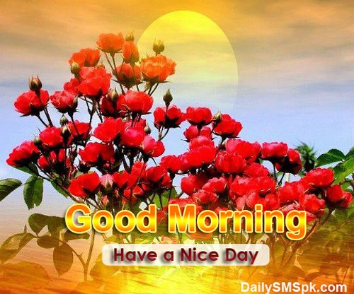 Have A Nice Day - Morning-wg16371