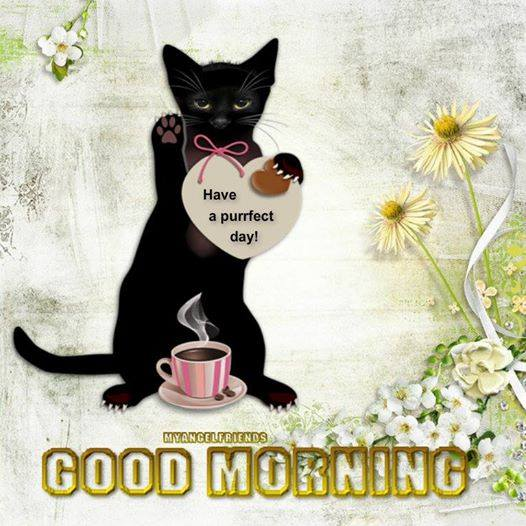 Have A Purfect Day - Morning-wg16375