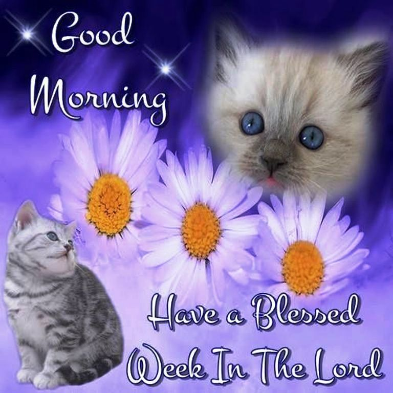Good morning friend have a