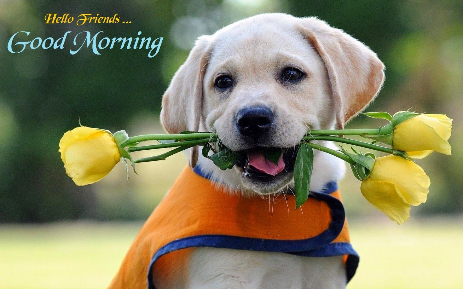 Good Morning Wishes With Dogs Pictures Images
