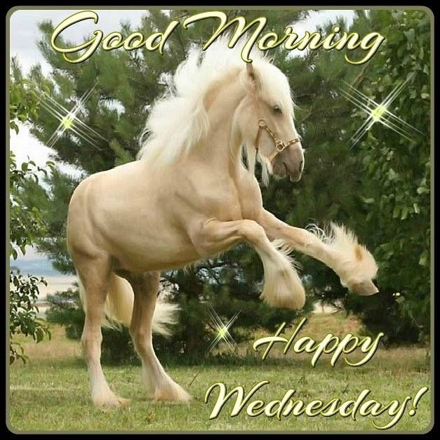 Image result for good morning gif horses