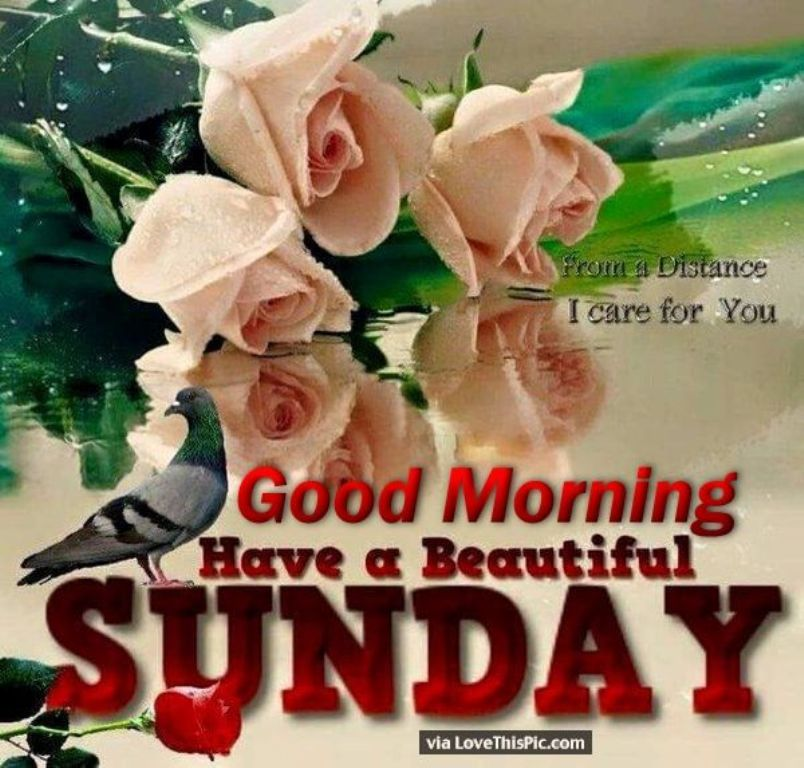 Good Morning Quotes Einstein : Good morning wishes on sunday pictures images page