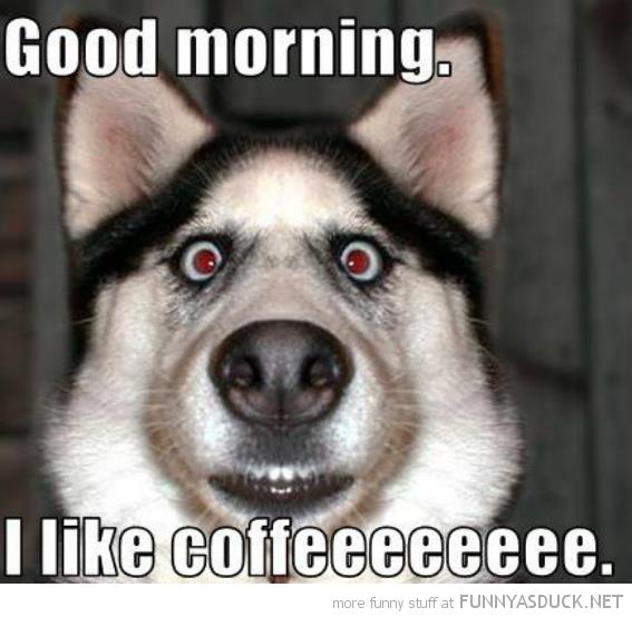 i like coffee funny morning