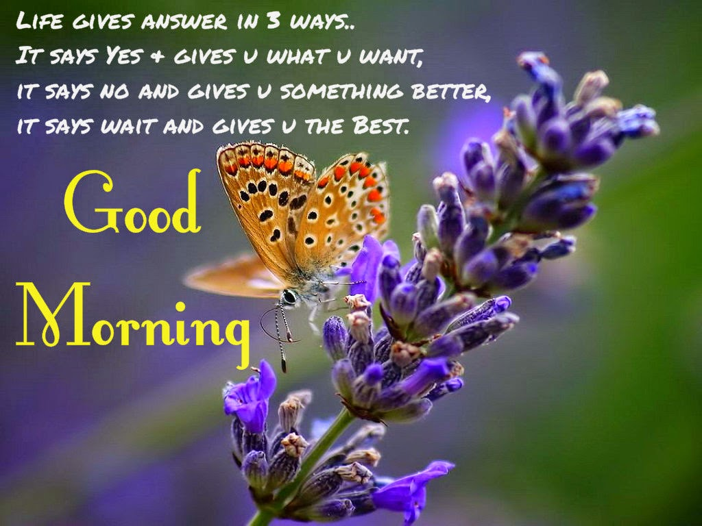 Good Morning Answer : Life gives answer in three ways good morning