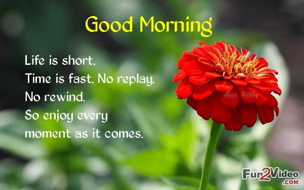 Life Is Short Good Morning