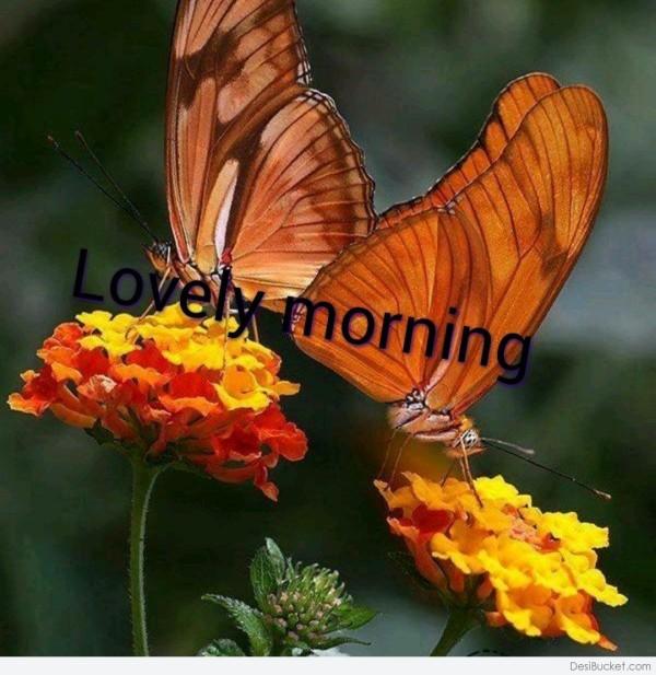 Lovely Morning - Wallpaper-wg16482