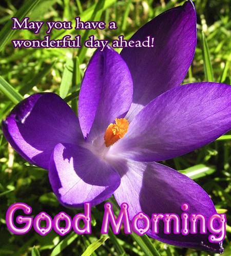 May You Have A Wonderful Day Ahead-wg16499