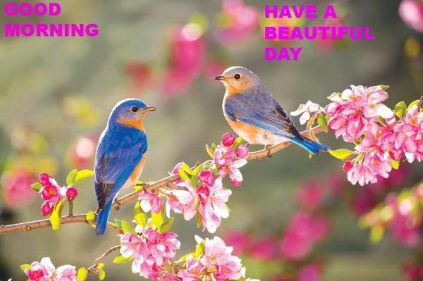 Morning - Birds-wg16519