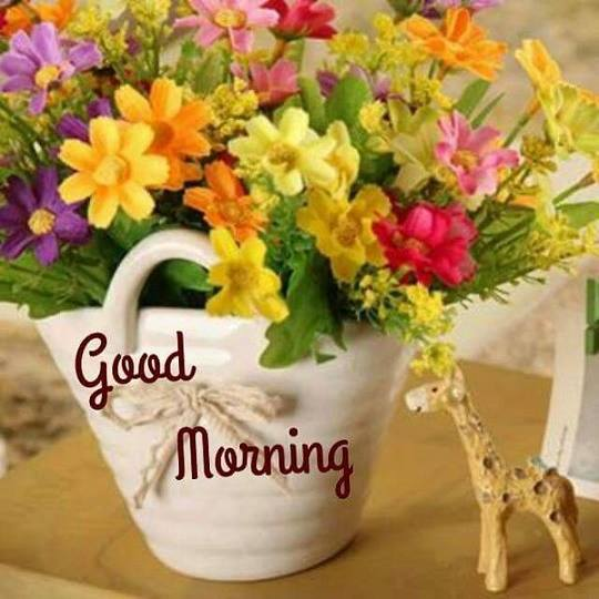 Morning - Colorful Flowers-wg16523