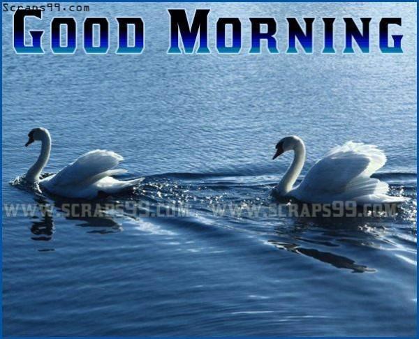 Morning - Ducks-wg16529
