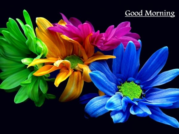 Morning Flowers Image