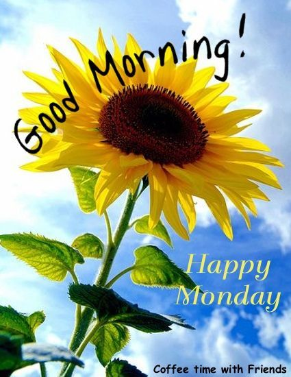Good Morning Wishes On Monday Pictures Images Page 10