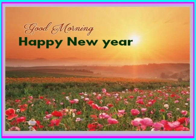 morning new year wg16542