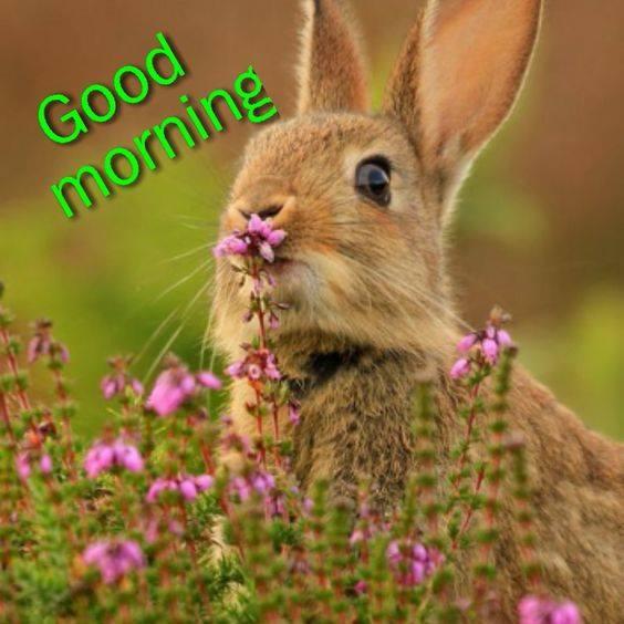 Morning - Rabbit-wg16547
