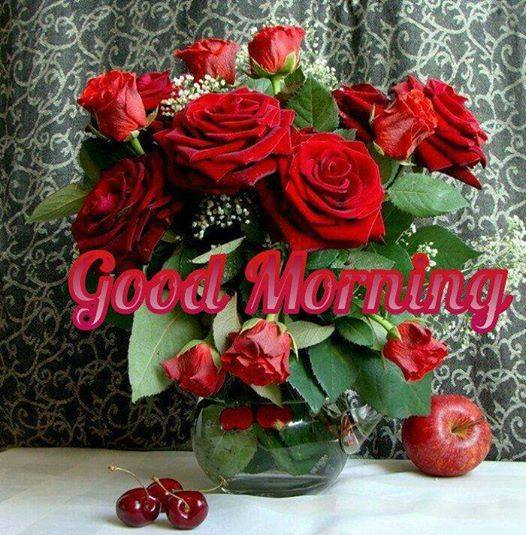 Morning Red Roses-wg16589