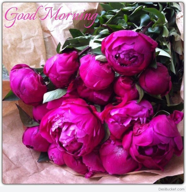 Morning Roses !-wg16591