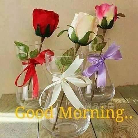 Morning Roses-wg16592