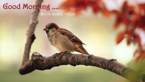 Morning Sparrow-wg16594