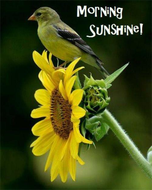 Morning Sunshine !!-wg16595