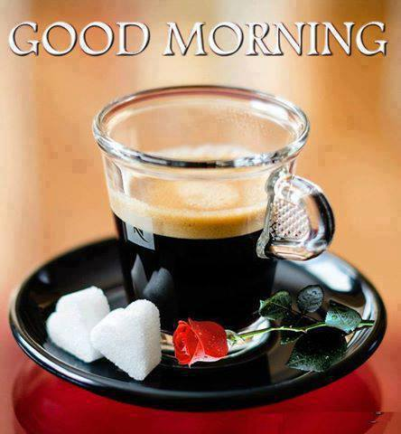 Morning Tea Cup-wg16598
