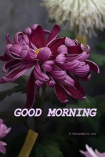 Morning - Wild Flower-wg16555