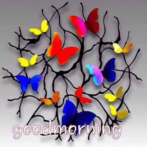 Morning With Colorful Butterflies-wg16607