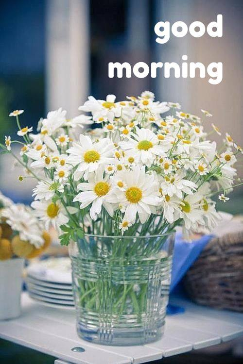 Morning With White Flowers-wg16623