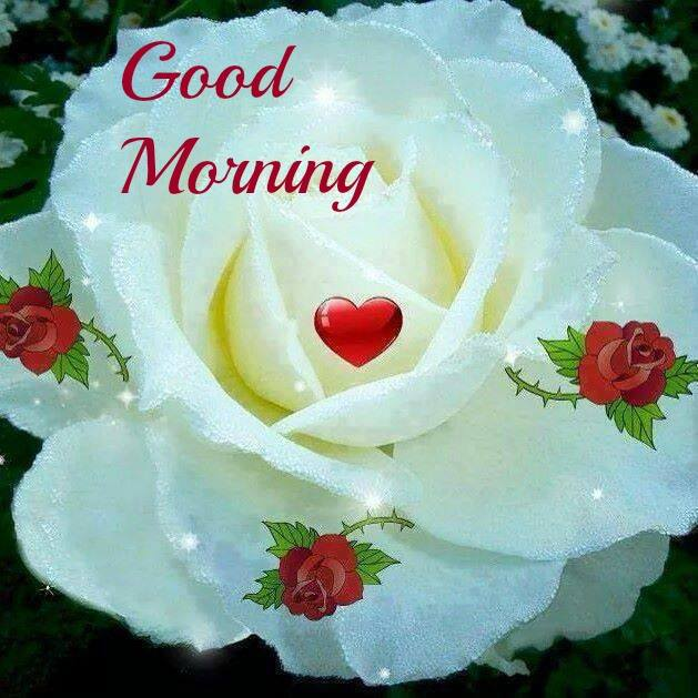 Good Morning Wishes With Flowers Pictures Images Page 7
