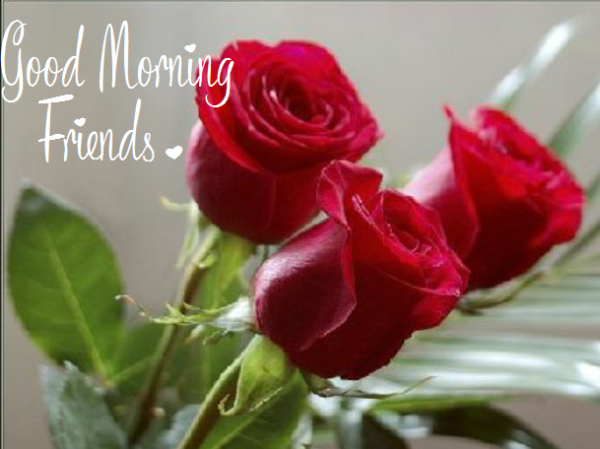 Morning With Beautiful Roses