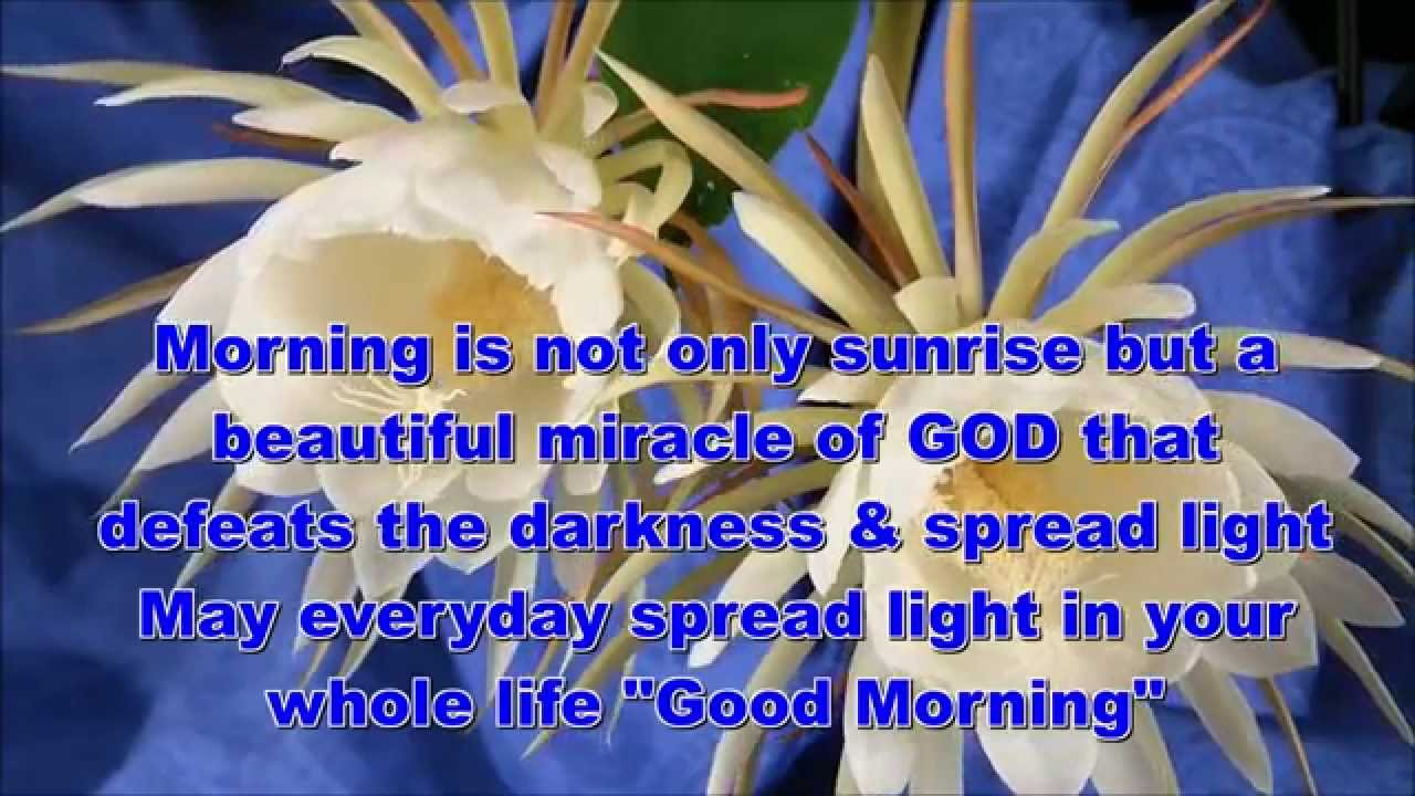 Good Morning Quotes Pictures Images Page 16