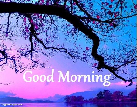 Morning !-wg16557