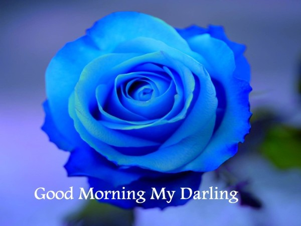 My Darling -  Good Morning !-wg16630