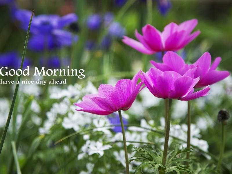 Nice Flowers Good Morning