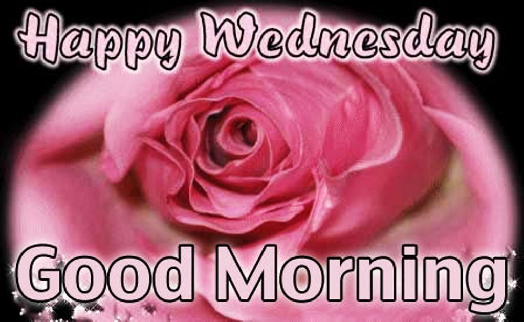 Good Morning Beautiful Pink Roses : Good morning wishes with flowers pictures images page