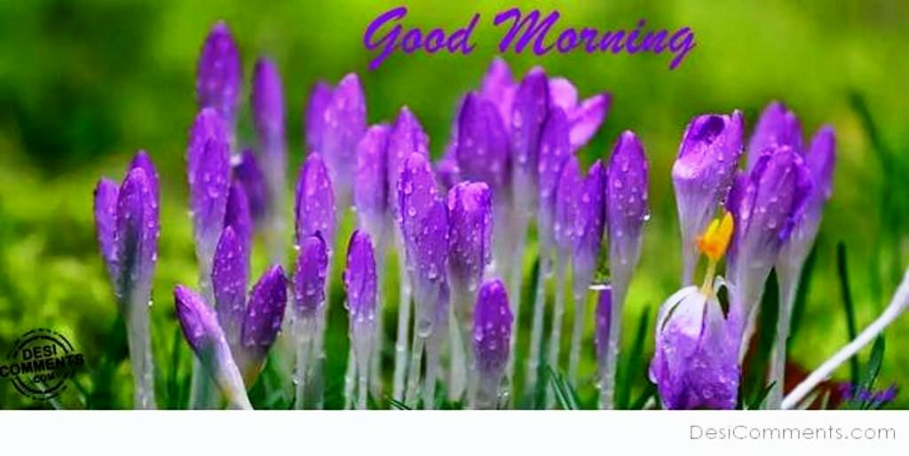 Good Morning Saturday Purple : Good morning wishes with flowers pictures images page
