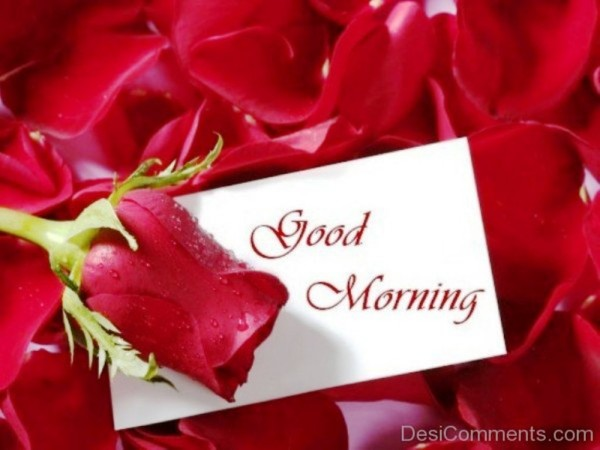 Good Morning Beautiful Red Rose Image : Good morning images with red rose imgkid the