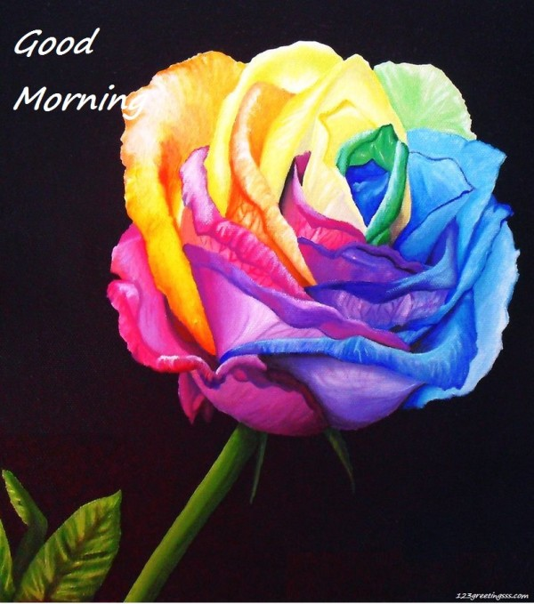 Rose For U - Good Morning-wg16673