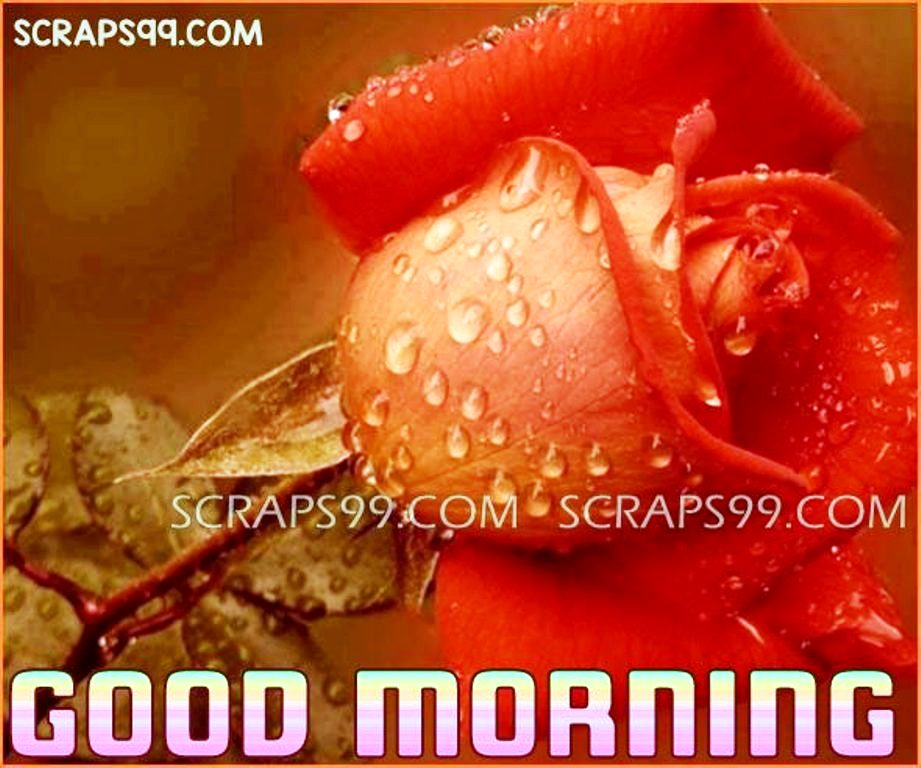 Good Morning Roses Download : Good morning wishes with flowers pictures images page