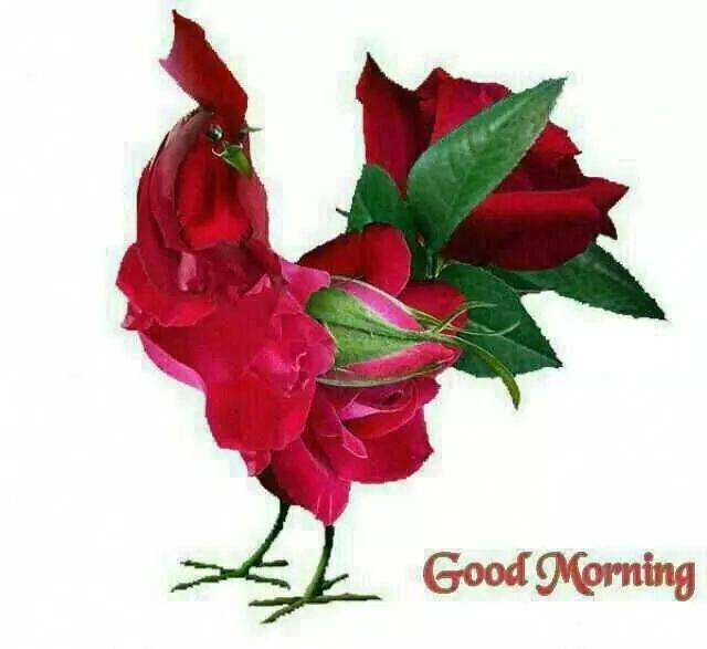 rose leave image good morning