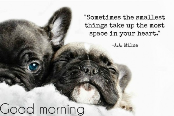 Good Morning Gorgeous French : Good morning wishes with dogs pictures images