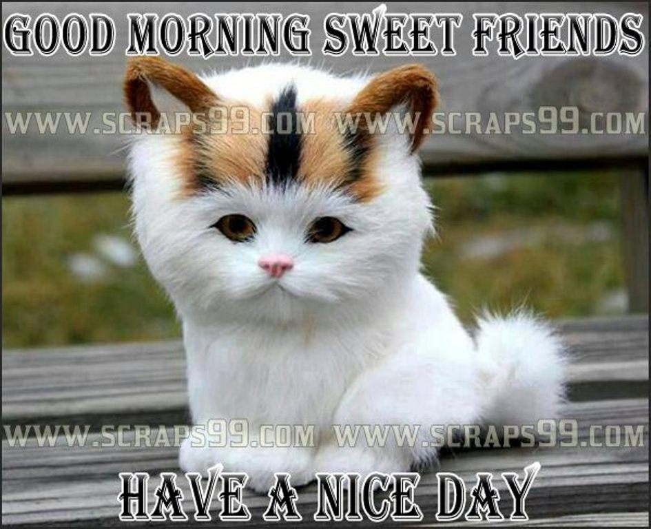 Http Www Wishgoodmorning Org Pictures Good Morning Wishes With Cat
